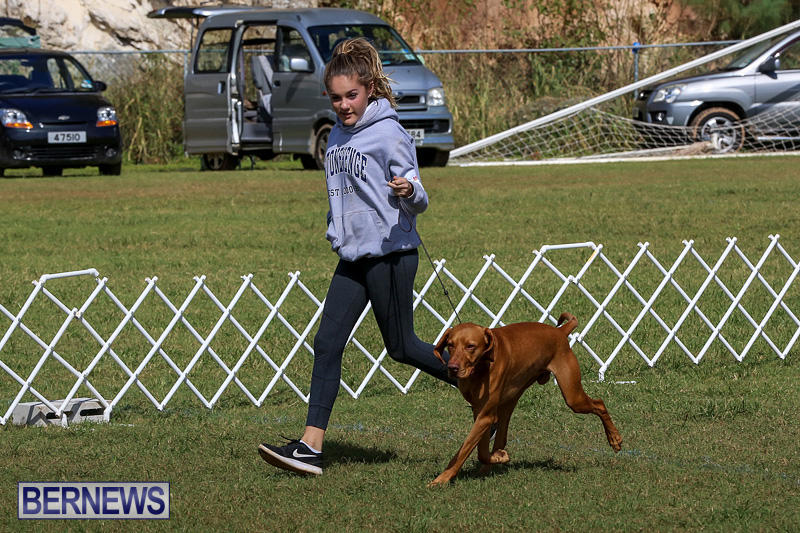 Bermuda-Kennel-Club-Dog-Show-October-23-2016-90