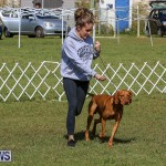 Bermuda Kennel Club Dog Show, October 23 2016-92