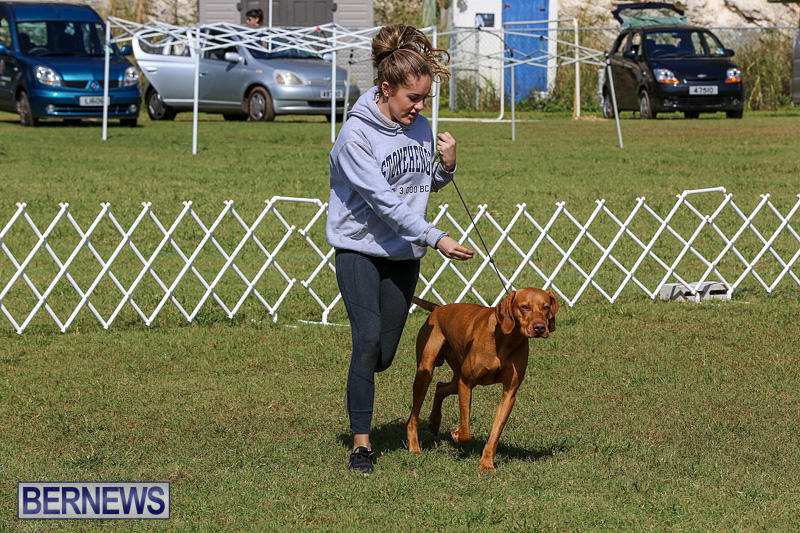 Bermuda-Kennel-Club-Dog-Show-October-23-2016-92