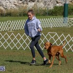 Bermuda Kennel Club Dog Show, October 23 2016-94