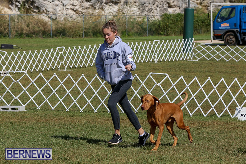 Bermuda-Kennel-Club-Dog-Show-October-23-2016-94