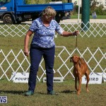 Bermuda Kennel Club Dog Show, October 23 2016-96
