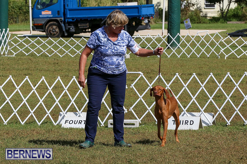Bermuda-Kennel-Club-Dog-Show-October-23-2016-96