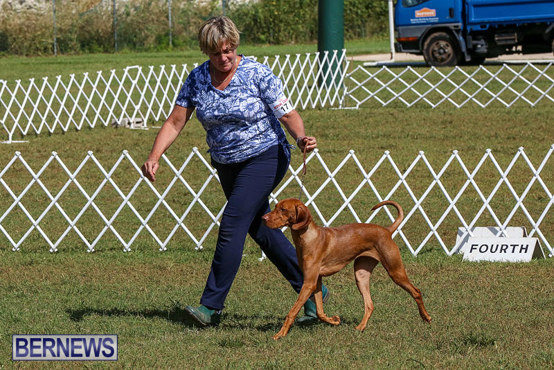 Bermuda-Kennel-Club-Dog-Show-October-23-2016-97