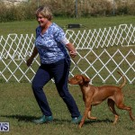 Bermuda Kennel Club Dog Show, October 23 2016-98
