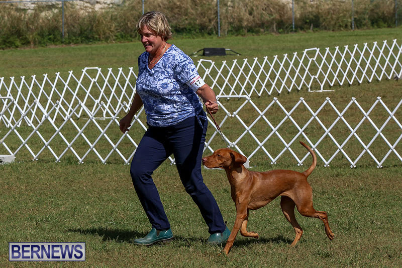 Bermuda-Kennel-Club-Dog-Show-October-23-2016-98