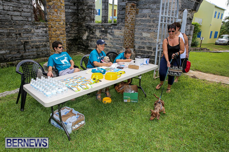 Blessing-Of-The-Animals-Bermuda-October-2-2016-1