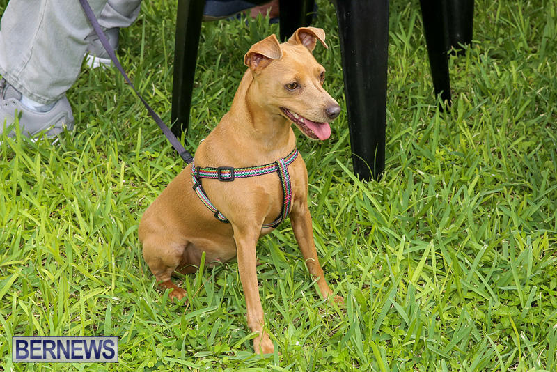 Blessing-Of-The-Animals-Bermuda-October-2-2016-10