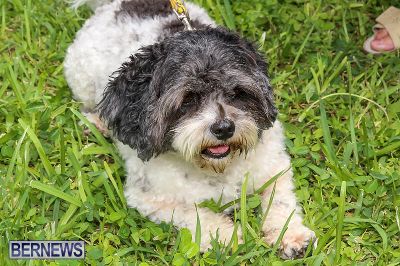 Blessing-Of-The-Animals-Bermuda-October-2-2016-12
