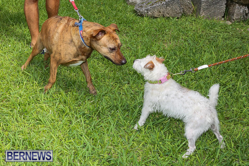 Blessing-Of-The-Animals-Bermuda-October-2-2016-15