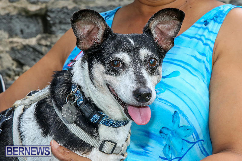 Blessing-Of-The-Animals-Bermuda-October-2-2016-19