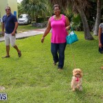 Blessing Of The Animals Bermuda, October 2 2016-21