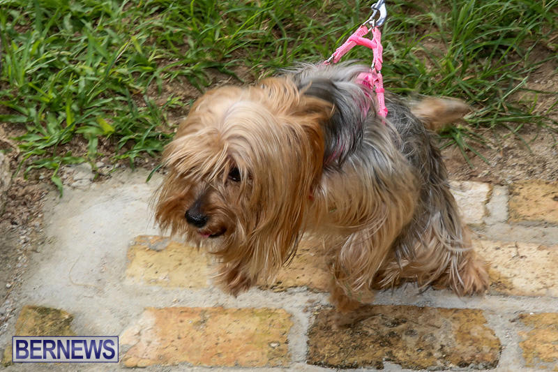 Blessing-Of-The-Animals-Bermuda-October-2-2016-22