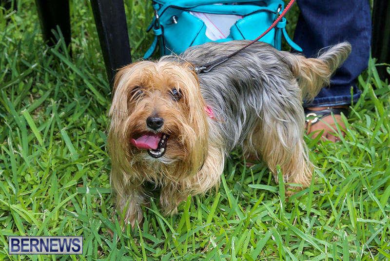 Blessing-Of-The-Animals-Bermuda-October-2-2016-27