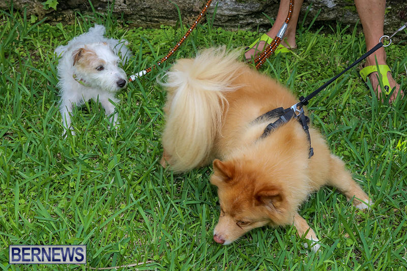 Blessing-Of-The-Animals-Bermuda-October-2-2016-30