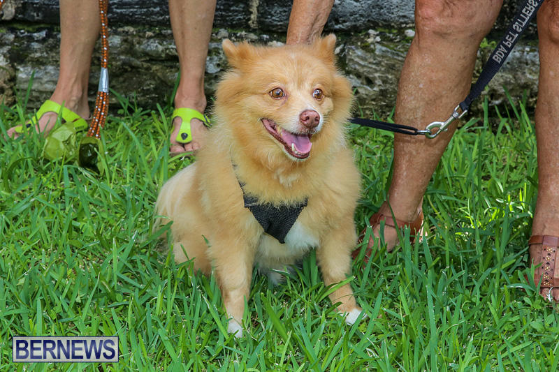 Blessing-Of-The-Animals-Bermuda-October-2-2016-31