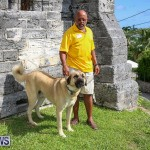 Blessing Of The Animals Bermuda, October 2 2016-34