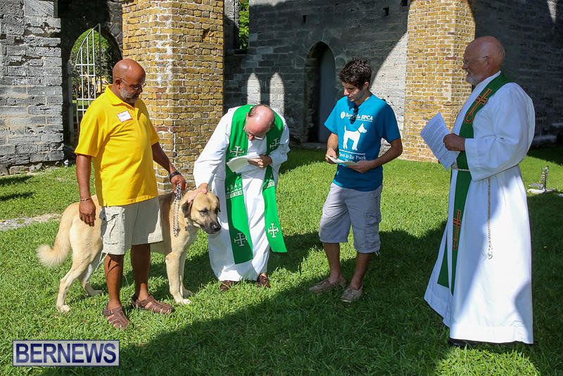 Blessing-Of-The-Animals-Bermuda-October-2-2016-39
