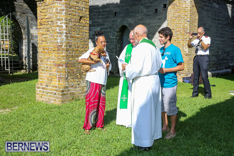 Blessing-Of-The-Animals-Bermuda-October-2-2016-42