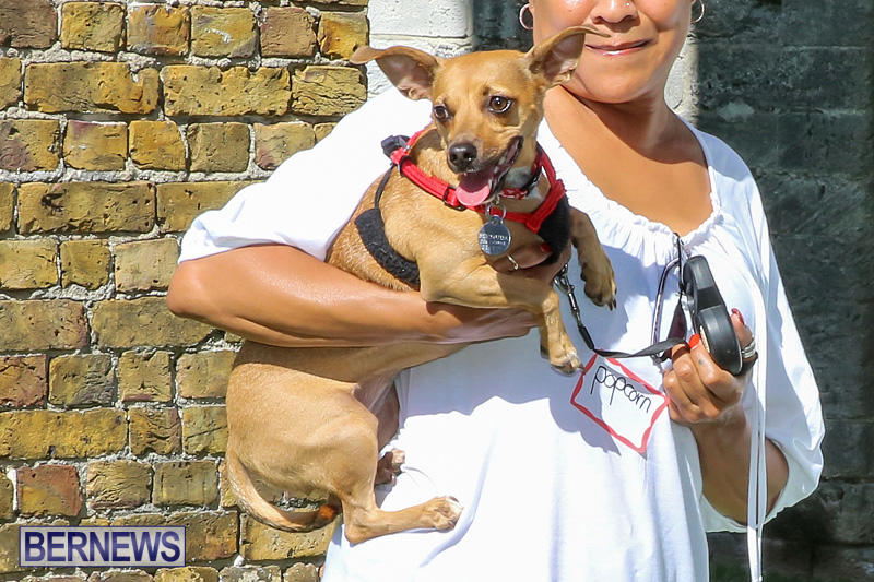 Blessing-Of-The-Animals-Bermuda-October-2-2016-44