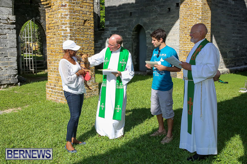 Blessing-Of-The-Animals-Bermuda-October-2-2016-45
