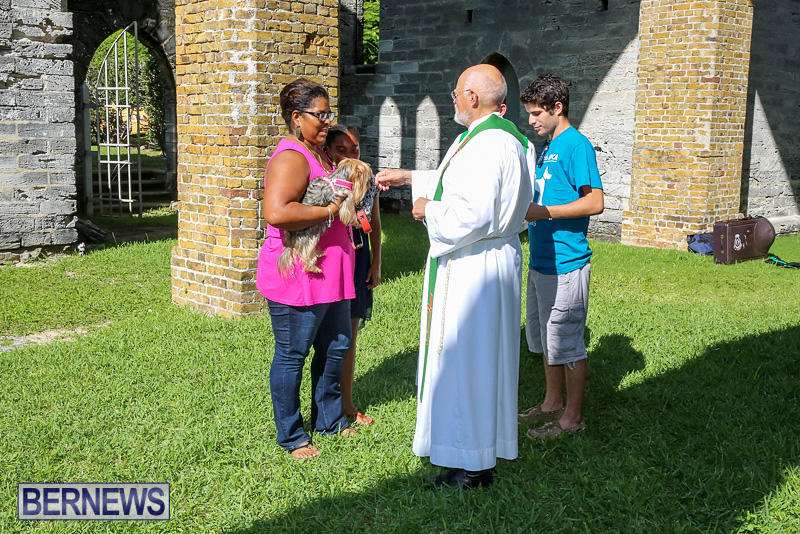 Blessing-Of-The-Animals-Bermuda-October-2-2016-48