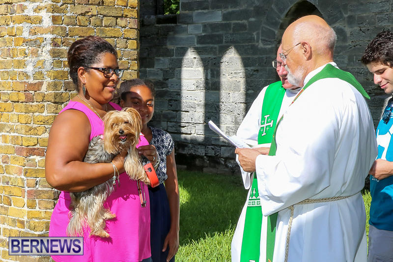 Blessing-Of-The-Animals-Bermuda-October-2-2016-49