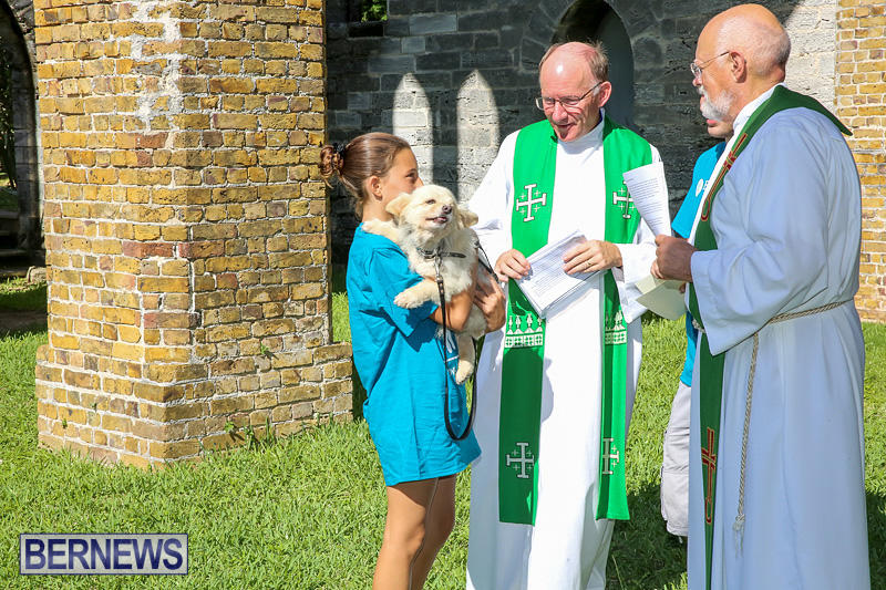 Blessing-Of-The-Animals-Bermuda-October-2-2016-50
