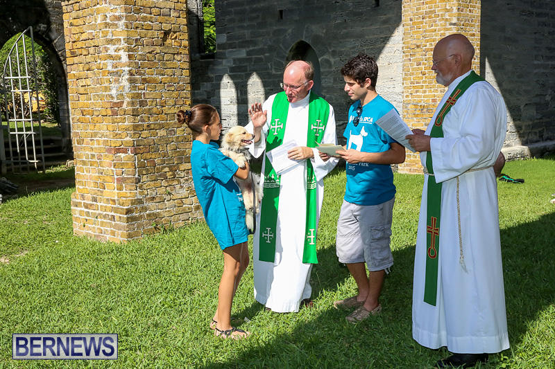 Blessing-Of-The-Animals-Bermuda-October-2-2016-51