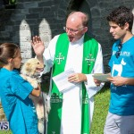 Blessing Of The Animals Bermuda, October 2 2016-52