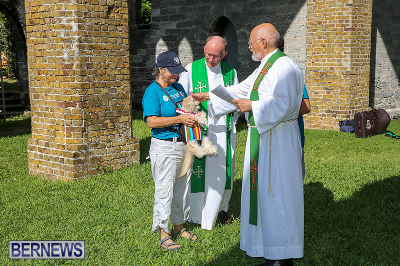 Blessing-Of-The-Animals-Bermuda-October-2-2016-55