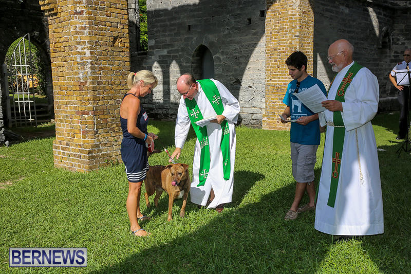 Blessing-Of-The-Animals-Bermuda-October-2-2016-57