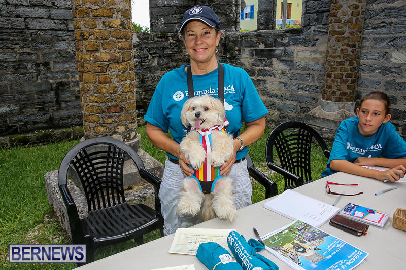 Blessing-Of-The-Animals-Bermuda-October-2-2016-6