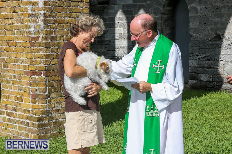 Blessing-Of-The-Animals-Bermuda-October-2-2016-60