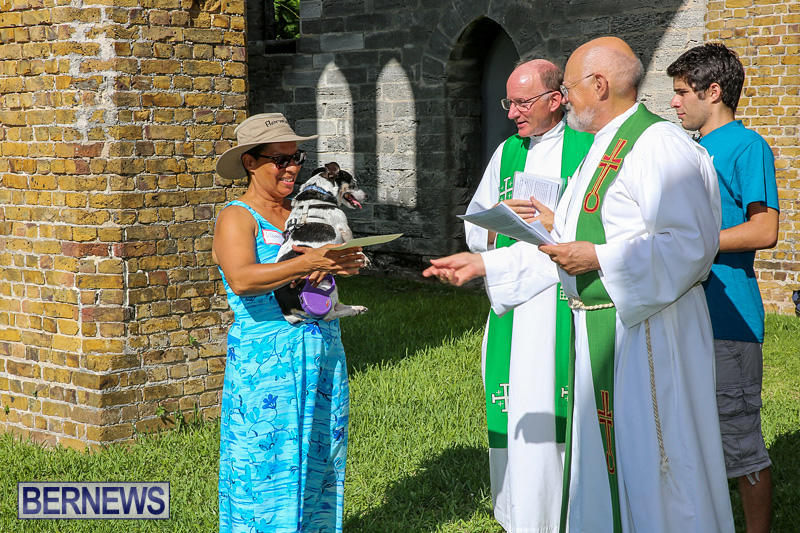 Blessing-Of-The-Animals-Bermuda-October-2-2016-64