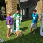 Blessing Of The Animals Bermuda, October 2 2016-65