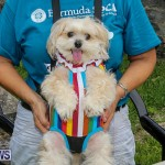 Blessing Of The Animals Bermuda, October 2 2016-7
