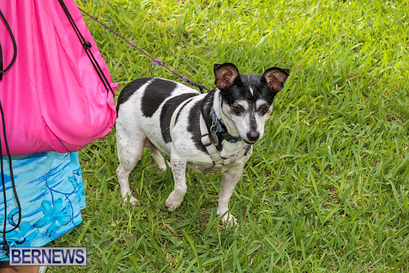 Blessing-Of-The-Animals-Bermuda-October-2-2016-8