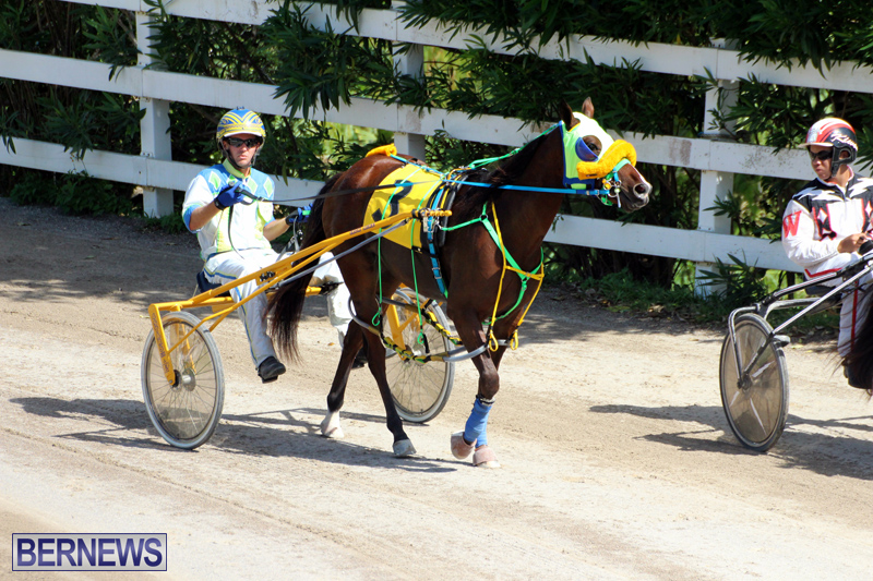 Harness-Pony-Racing-Bermuda-Oct-9-2016-1
