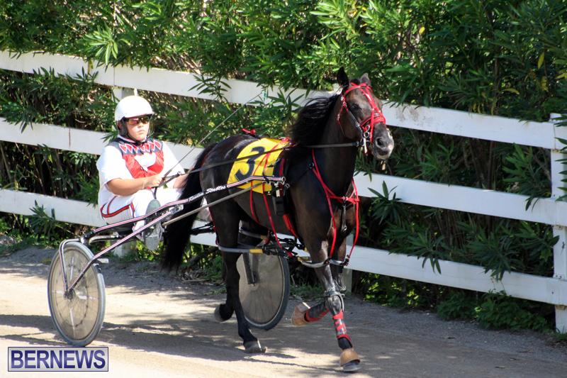 Harness-Pony-Racing-Bermuda-Oct-9-2016-3