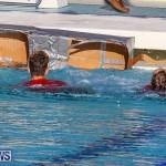 Cardboard Boat Challenge Bermuda, November 18 2016-125