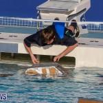 Cardboard Boat Challenge Bermuda, November 18 2016-68