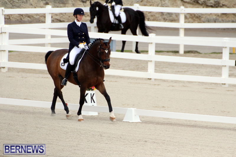 FEI-World-Dressage-Challenge-Bermuda-Nov-12-2016-1