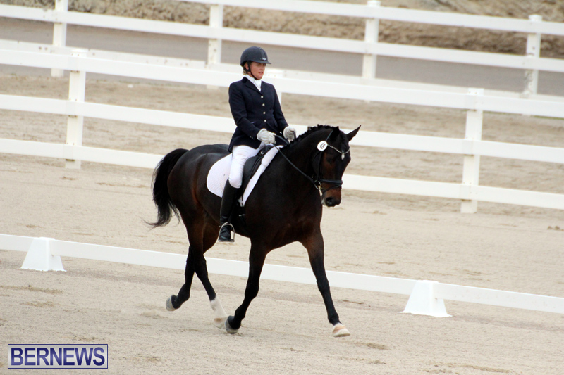 FEI-World-Dressage-Challenge-Bermuda-Nov-12-2016-11