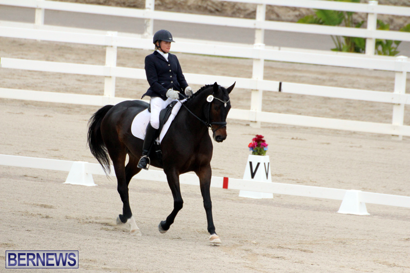 FEI-World-Dressage-Challenge-Bermuda-Nov-12-2016-12