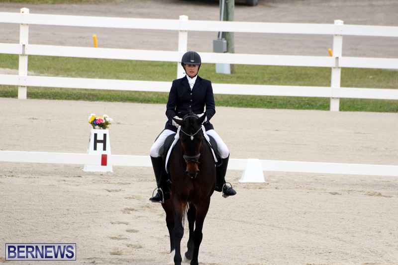 FEI-World-Dressage-Challenge-Bermuda-Nov-12-2016-13