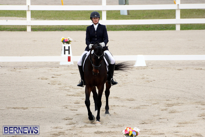 FEI-World-Dressage-Challenge-Bermuda-Nov-12-2016-16