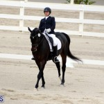 FEI World Dressage Challenge Bermuda Nov 12 2016 (18)