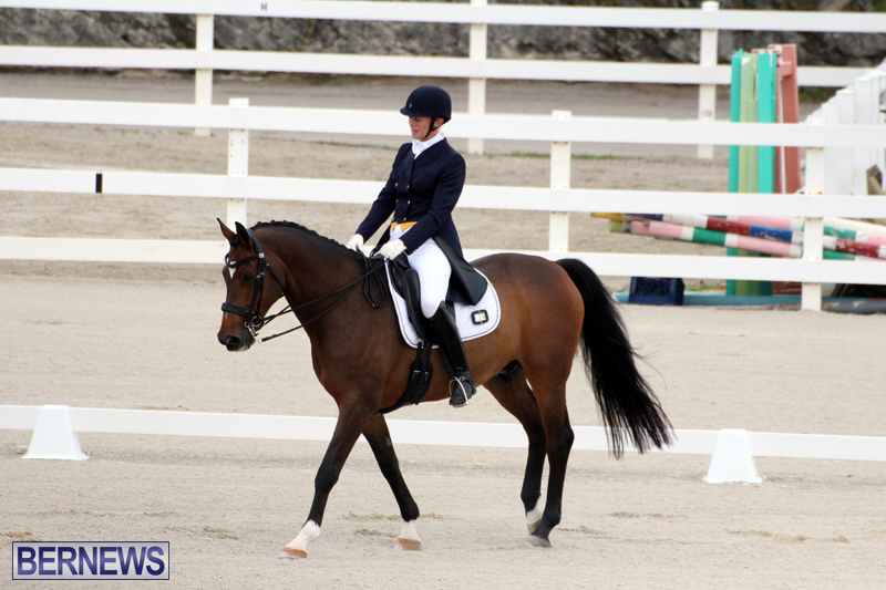 FEI-World-Dressage-Challenge-Bermuda-Nov-12-2016-2
