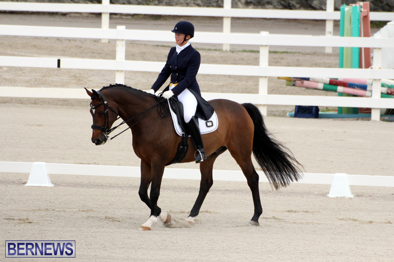 FEI-World-Dressage-Challenge-Bermuda-Nov-12-2016-3